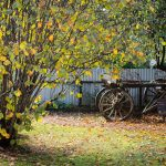 Guesthouse Cart