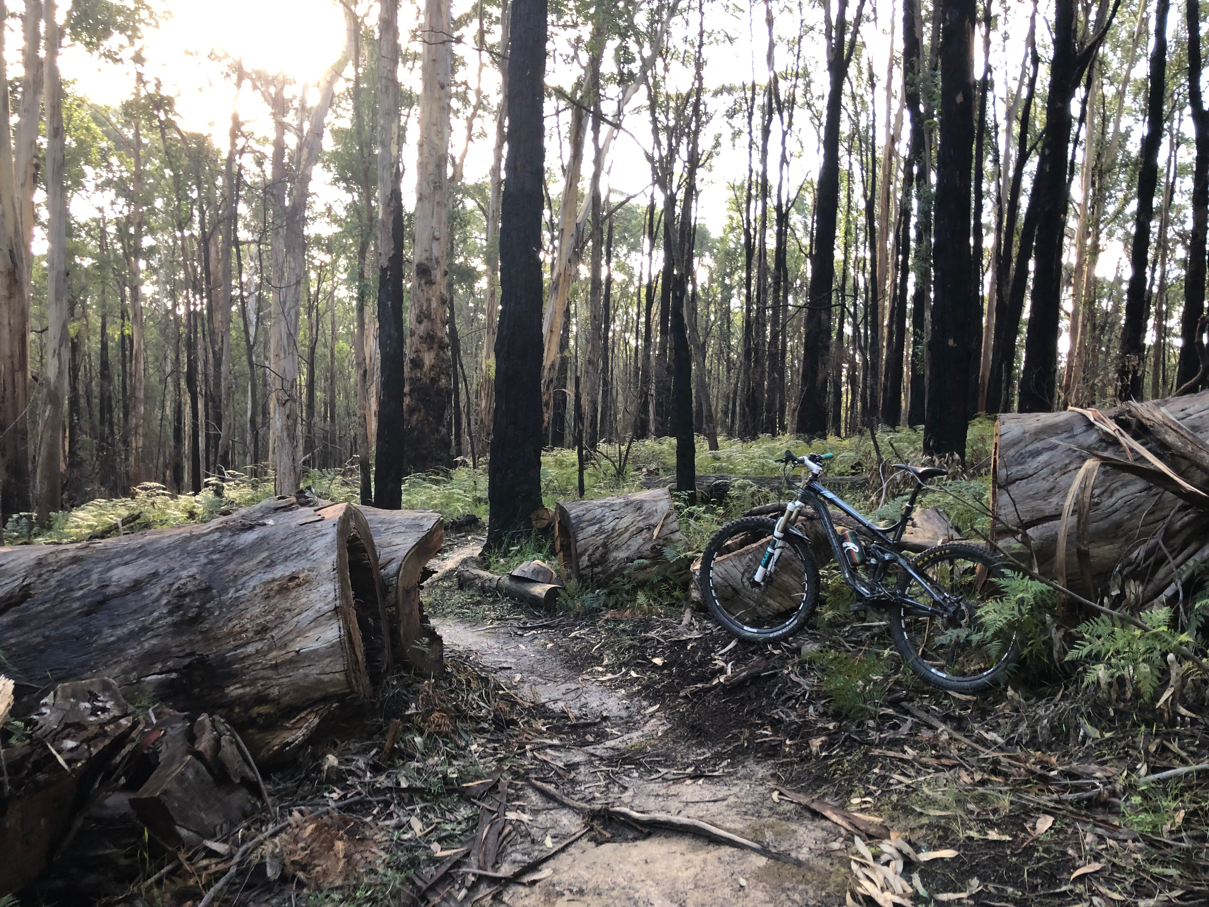 Forrest Mountain Bike Trails Accommodation