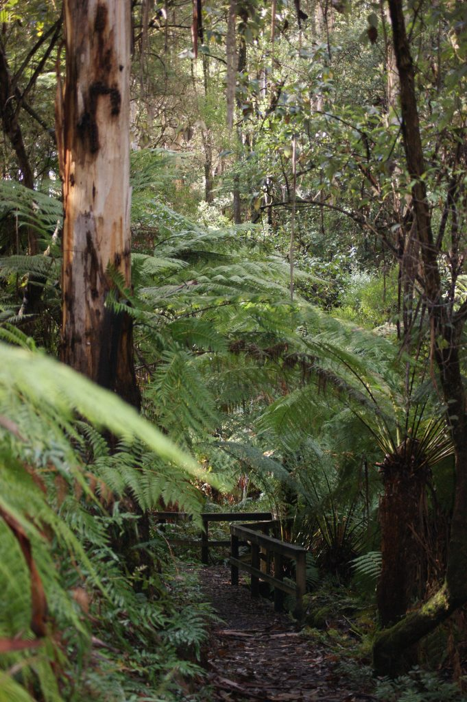 Fern Gully Walk Bridge, Forrest
