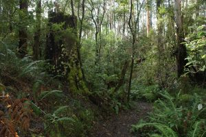 Fern Gully Walk Forrest