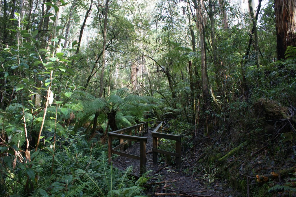 Fern Gully Walk Forrest Accommodation