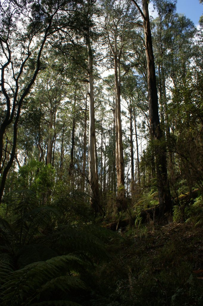 Fern Gully Walk, Forrest Accommodation