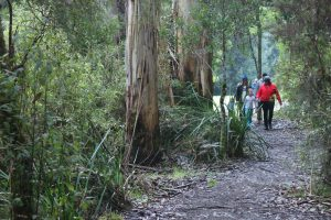 Family Friendly accommodation Forrest