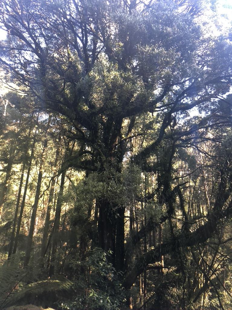 Lardners/Turtons Loop Forrest Gravel Grind Otways