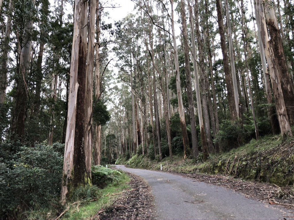 The EC Loop Gravel Grind Forrest and the Otways