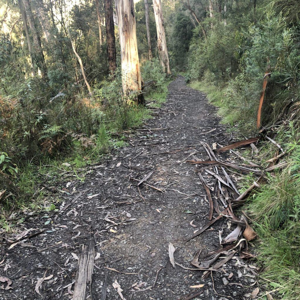 The main fire trail