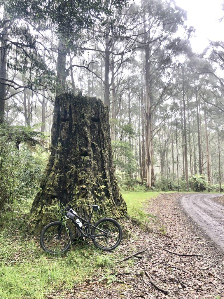 Kaanglang Thompsons Loop Forrest Gravel Grind Otways